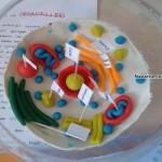 oyun-hamuruyla-hucre-modeli