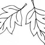 yaprak-kalplari-3