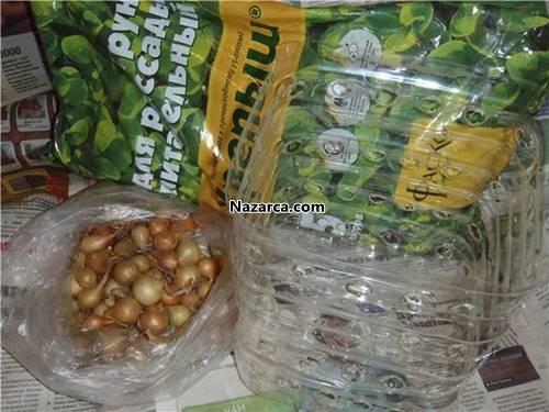 plastik-damacanada-sogan-yetistir-2
