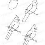 kolay-papagan-cizme