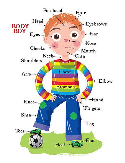 Ingilizce ve türkçe resimli insan vücudunun bölümleri