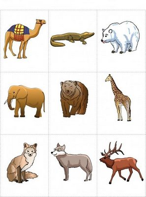 renkli-orman-hayvanlari