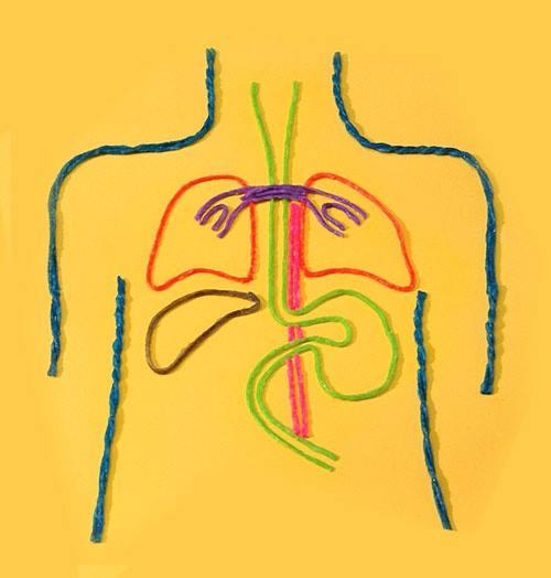 iplerle-insan-anatomisi