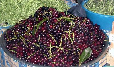 karayemis-karadeniz-meyvesi-laz-uzumu