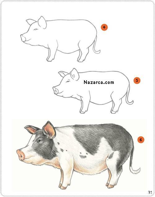 domuz-resmi-cizimi-nazarca