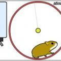hamster-besleme