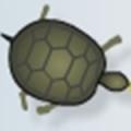 kaplumbaga-besle