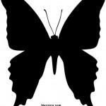 kara-siyah-kelebek-sablonu