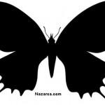 kelebek-baski-resimleri