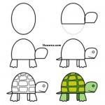 kolay-ayakli-kaplumbaga