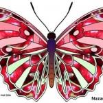 rengarenk-kelebek-sablonu
