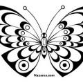 siyah-beyaz-kelebek-resimleri-sablonlari
