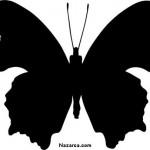 siyah-kelebek