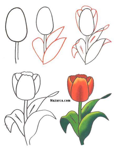 Тюльпаны на открытку