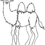 hayvan-boyama-deve-resimleri-sayfalari