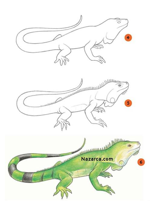 iguana-cizimi