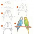 kolay-papagan-nasil-cizilir