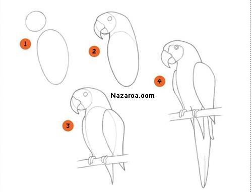 papagan-nasil-cizilir