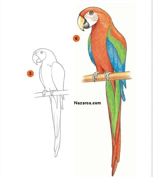 papagan-resmi-nasil-cizilir