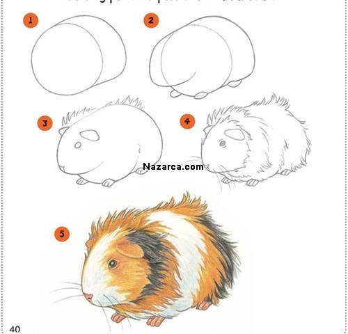 hemster-nasil-cizilir-hamster-hemstir