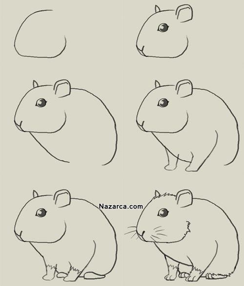 hamster-fare-cizme-yontemi