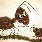 kahve-cekirdekleri-ile-karinca-ve-agustos-bocegi