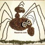 kahve-cekirdekleri-ile-orumcek