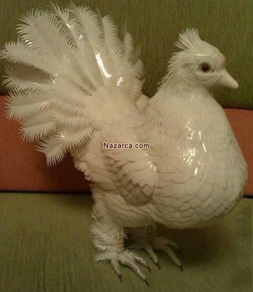 plastik-siseden-tavuk-yapimi-8