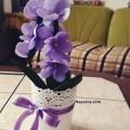 satilik-kece-orkide-cicegi