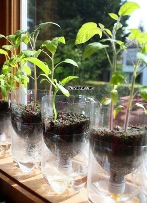 mutfak-caminda-sevimli-bitki-yetistirme-teknigi-5