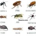 Böcekler ve Fareleri Evden Uzak Tutmak