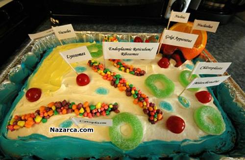 edible-cell-hucre-modeli