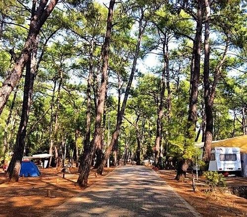 Akyaka- Orman-Kamp-Alani